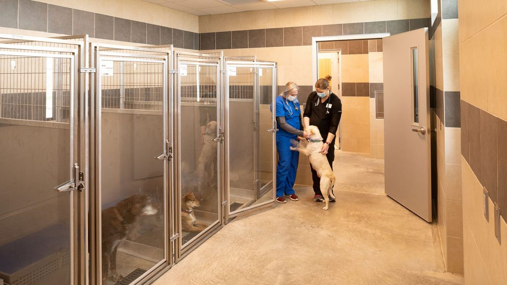 Southeast Technical College Veterinary, Dental, & Administration Renovations